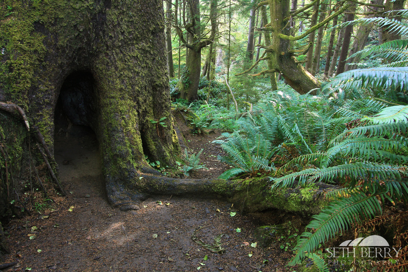 Ecola State Park Forest 3