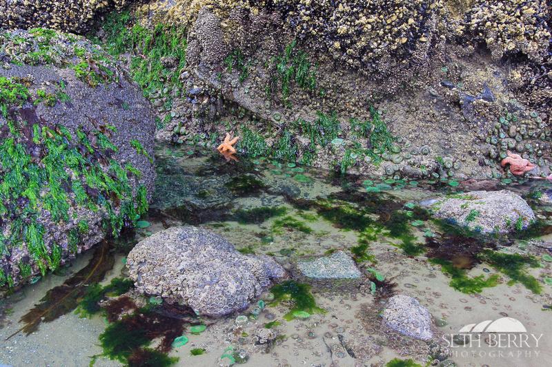Tide Pooling 3
