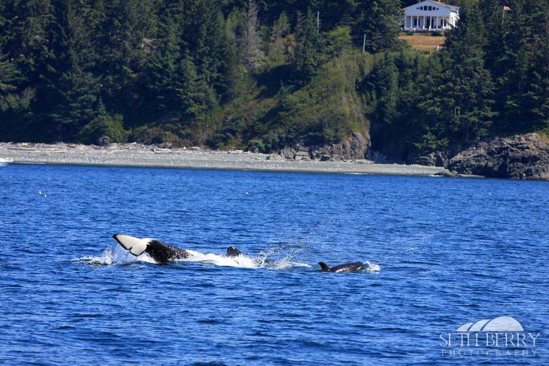 Orca Tricks