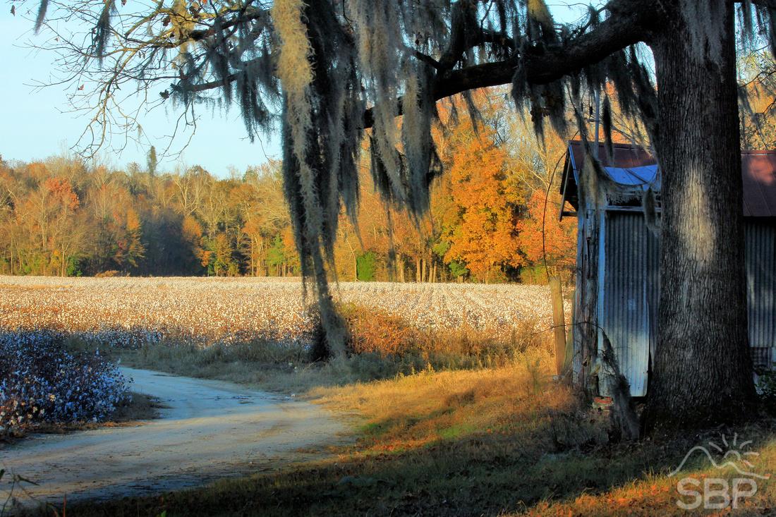 Buck Branch Autumn