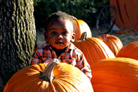 Pumpkin Patch Chi 1