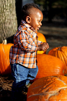 Pumpkin Patch Chi 15