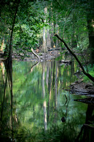 Congaree Reflections