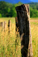 Cades Cove Fence Post