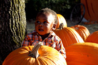 Pumpkin Patch Chi 2