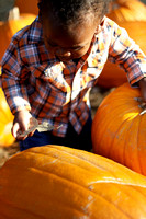 Pumpkin Patch Chi 9