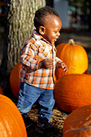 Pumpkin Patch Chi 14