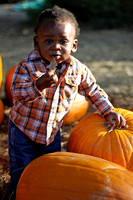 Pumpkin Patch Chi 10
