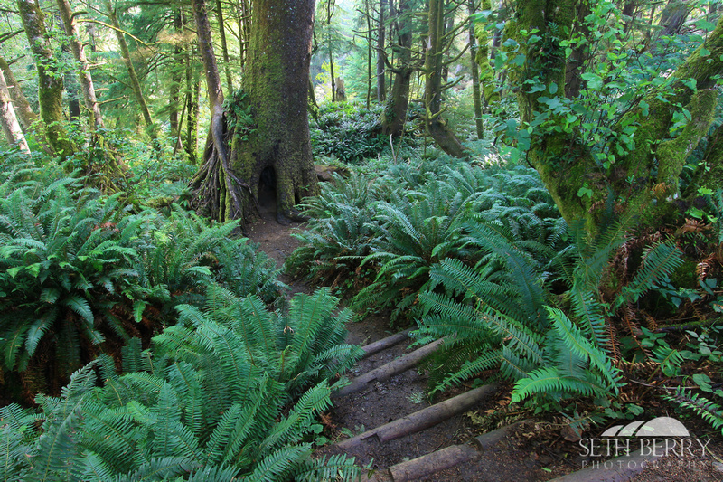 Ecola State Park Forest 2