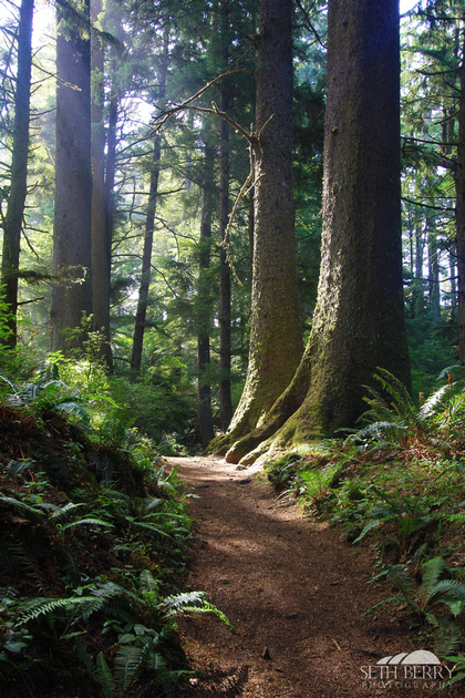 Ecola State Park Forest 4