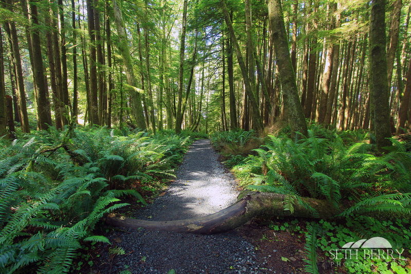 Ecola State Park Forest 5