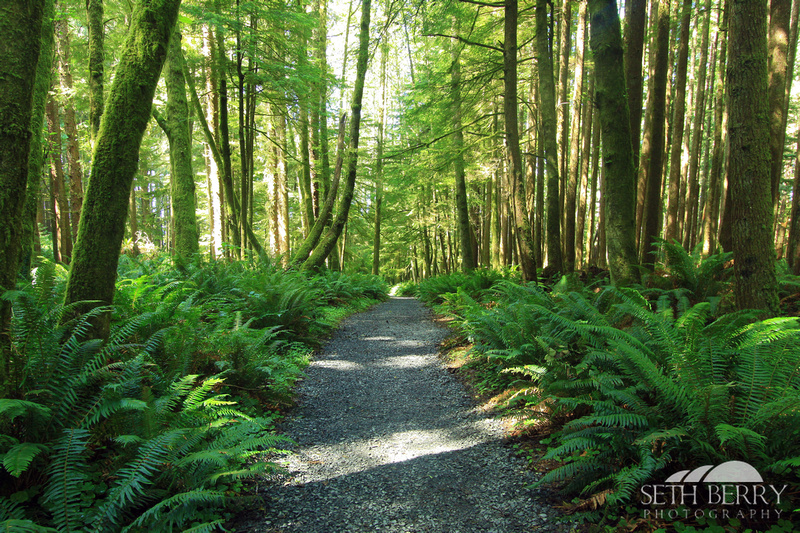Ecola State Park Forest 6