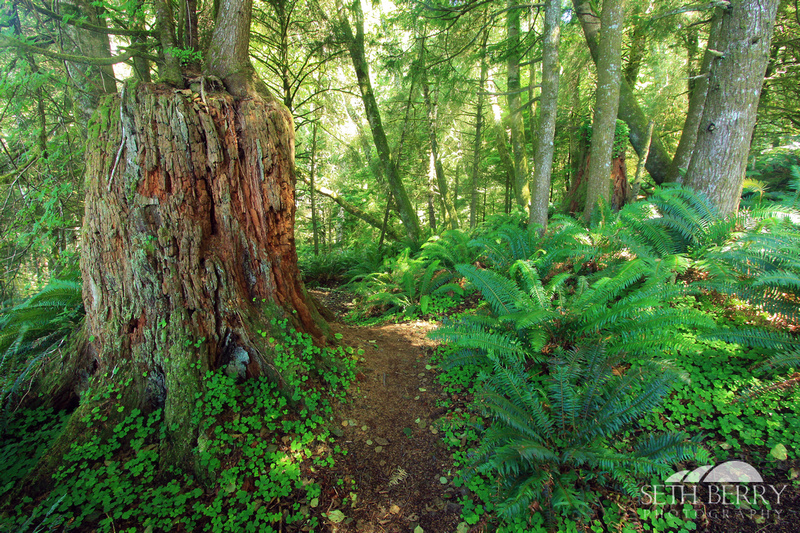 Ecola State Park Forest 7