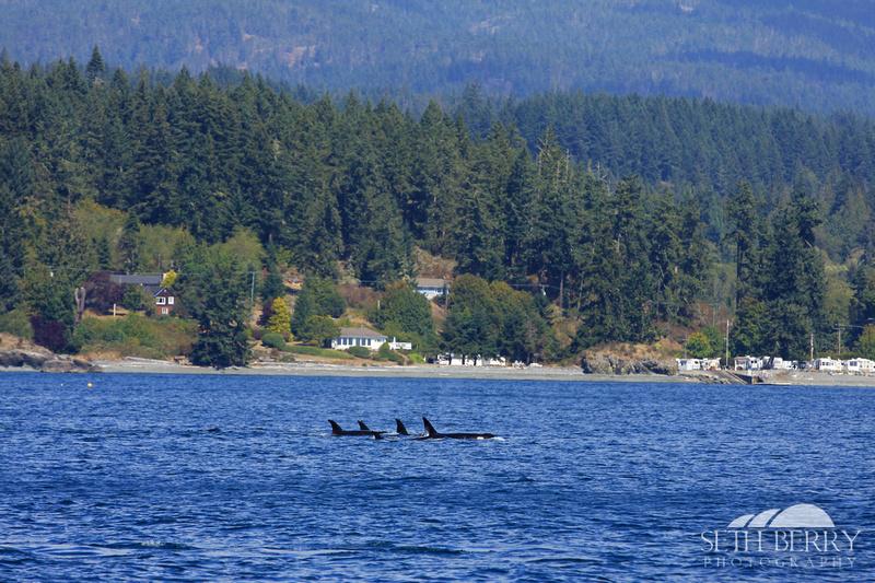 Orcas in Canada