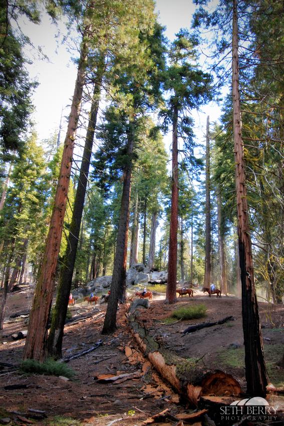 Grant Grove, Kings Canyon National Park