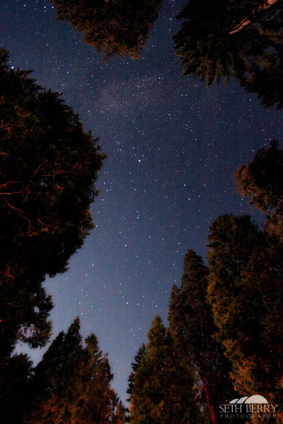 Grant Grove Under the Stars
