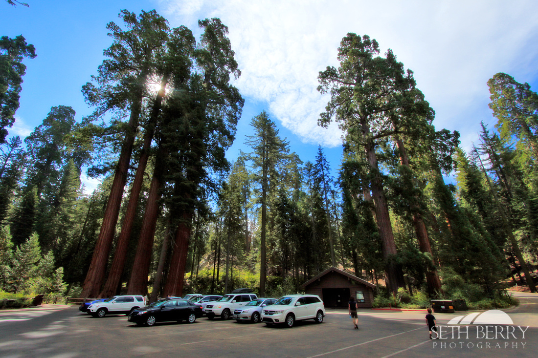 Grant Grove, Kings Canyon National Park